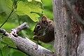 Delafield, WI, USA - panoramio - NaturesFan1226 (4).jpg