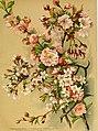 Die Gartenwelt (1903) (20894095496).jpg
