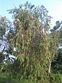 Digha Amravati Park Plants 2.jpg