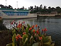 Dimona Lake5.jpg