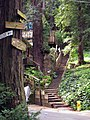 Dipsea Trail, the corner of Millside Lane and Marion Avenue, just above the Cascade Way stairway. - panoramio.jpg