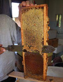 hoe maakt een bij honing