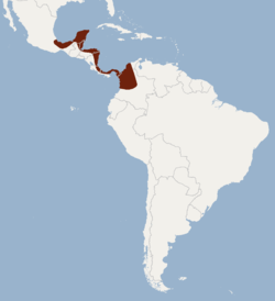 Distribution of mimon cozumelae.png