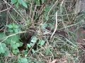 File:Dog Stuck In The Weeds and Vines.webm