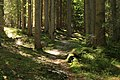 Dolomiti 07-2010 - panoramio (10).jpg