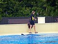 Dolphin Trainer (7981037188).jpg