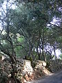 Domaine des Treilles (Var) 26.JPG