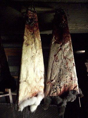 Cuniculture - Dried rabbit pelts