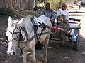 Donkey carts in Awassa, Ethiopia.JPG