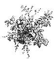 Dorci-Vignette-p30.jpg