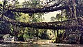 Double Root Bridge, Cherrapunji, Meghalaya, India.jpg