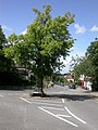 Downe, High Street - geograph.org.uk - 1398870.jpg
