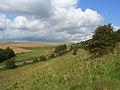 Downland, West Knoyle - geograph.org.uk - 975501.jpg