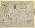 Drawing, Studies of Trees and Plants seen from the Rio Magdalena, Columbia, 1853 (CH 18193941).jpg