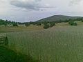 Drithrat e Kosoves.jpg
