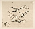 Ducks (Decoration for a Plate) MET DP814352.jpg