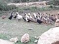 Ducks 20190401 172702.jpg