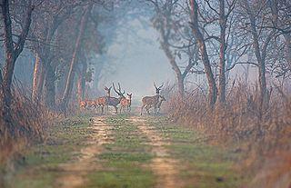 Dudhwa Tiger Reserve part of Dudhwa National Park set aside for tigers