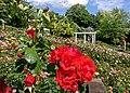 Duftende Schönheit, der Rosengarten im Kurpark Bad Mergentheim. 08.jpg