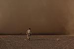 Dust storm engulfs Marine 121209-M-ZE895-010.jpg