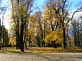 Dzierzoniow park za kinem Zbyszek - panoramio.jpg