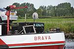 ENI 02316394 BRAVA (04).JPG