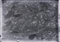 ETH-BIB-Tschäppel, Nyffenegg, Huttwil v. W. aus 3000 m-Inlandflüge-LBS MH01-003223.tif