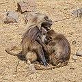 ET Amhara asv2018-02 img031 Wunenia.jpg