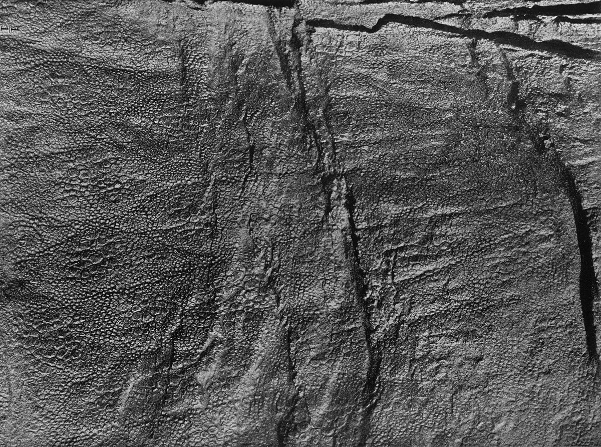 Edmontosaurus Mummy Amnh 5060 Wikipedia