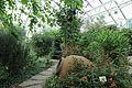 Edvard Andersons växthus-IMG 1617.jpg