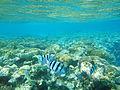 Eilat-coral-beach-reserve-b.JPG