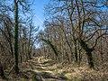 Elburgo - Camino en el bosque 01.jpg
