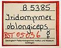 Eldermyrmex oblongiceps GZG-BST05036 specimen tag.jpg