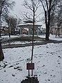 Elemér Rakssányi memorial tree, 2018 Pestújhely.jpg