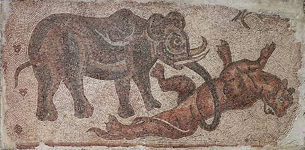 Mosaic of an elephant attacking a tiger, from Roman Syria, which occupied parts of what is now Anatolia and Mesopotamia Elephant Attacking a Feline.jpg
