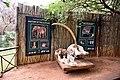Elephant Sanctuary, Hartbeespoort, North West, South Africa (19894672064).jpg