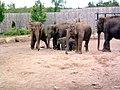 Elephants (160556672).jpg