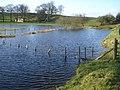 Enlarged pond near Molecatchers Wood - geograph.org.uk - 687143.jpg