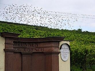 Rheingau (wine region) - Erbacher Marcobrunn, surrounded by vineyards.