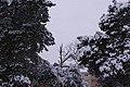 Erster starker Schneefall - panoramio - der psycho 78.jpg