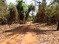 Estrada dentro da floresta em Rubinéia - panoramio.jpg