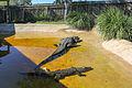 Everglades (12561359905).jpg