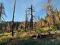 Evidence of the 2015 Lake Fire on the Forsee Creek Trail.jpg