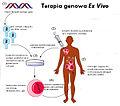 ExVivoGeneTherapy pl.jpg