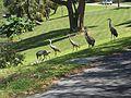 FL Fruitland Park birds01.jpg