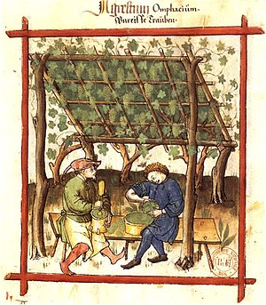 White wine - White grapes in the late Middle Ages.