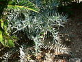 Fale - Giardini Botanici Hanbury in Ventimiglia - 673.jpg