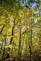 Fall colours (30009064780).jpg