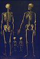 Familia de esqueletos (José López Enguídanos, MRABASF 78) 01.jpg