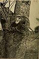 Familiar wild animals (1906) (14767341004).jpg
